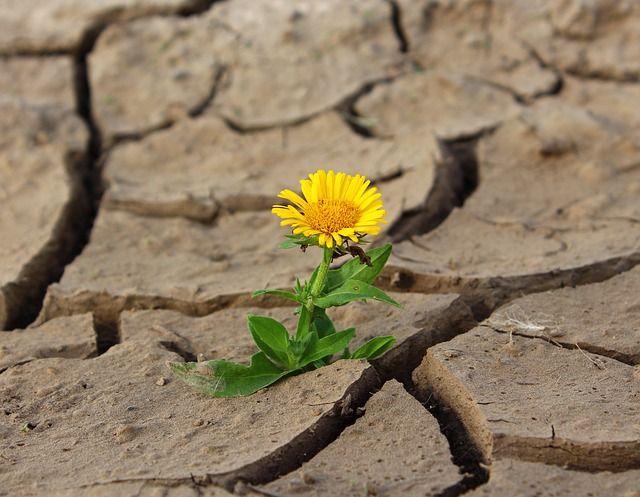 Flor saliendo de tierra árida representando resiliencia