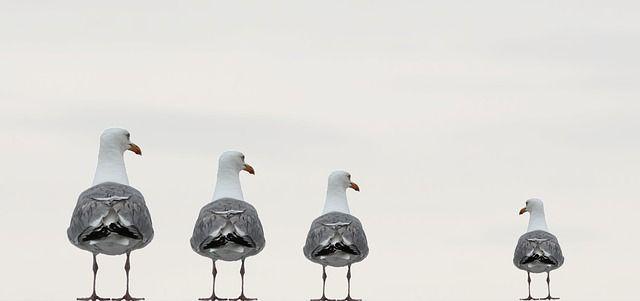 Cuatro pájaros el ultimo es mucho mas pequeño analogía de una autoestima baja